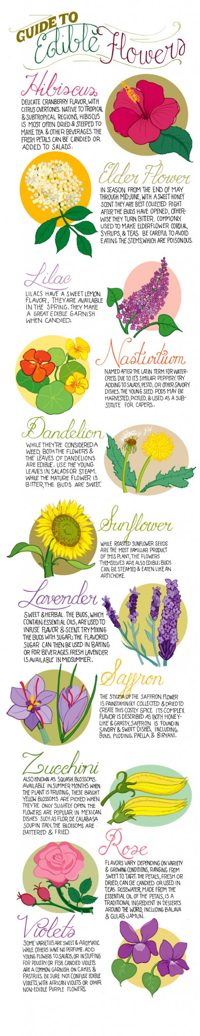 Edible flowers infographic