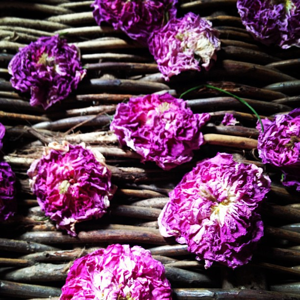 Roses dried for perfume at @kentwellhall
