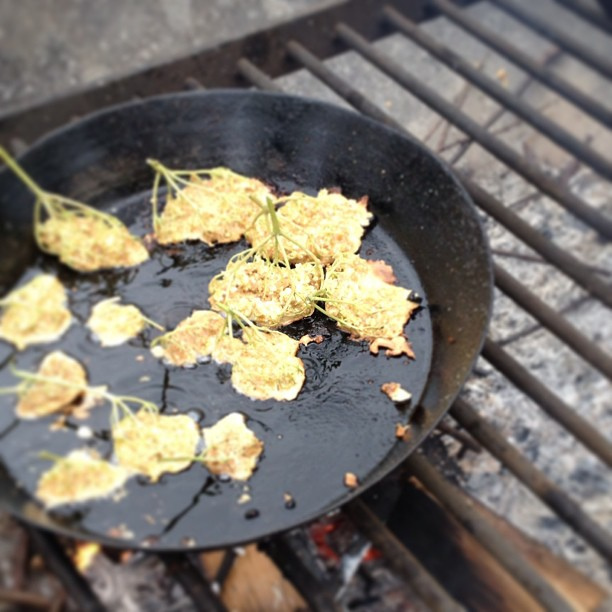 Elderflower Fritters on an open flame at @kentwellhall