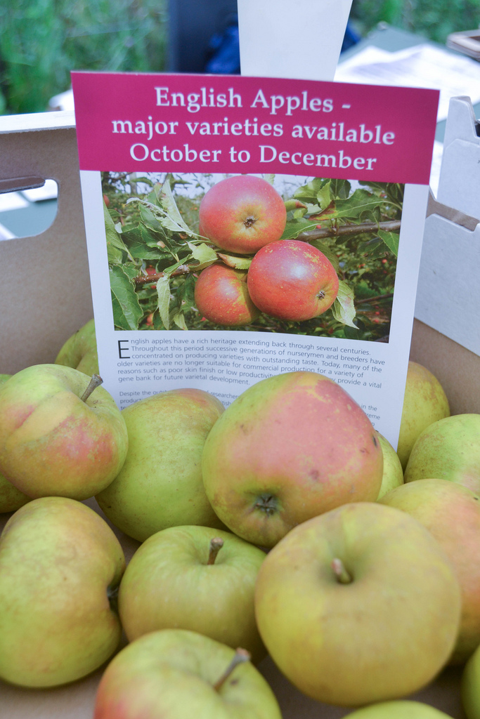 Apple Day at Forty Hall Orchard 2013