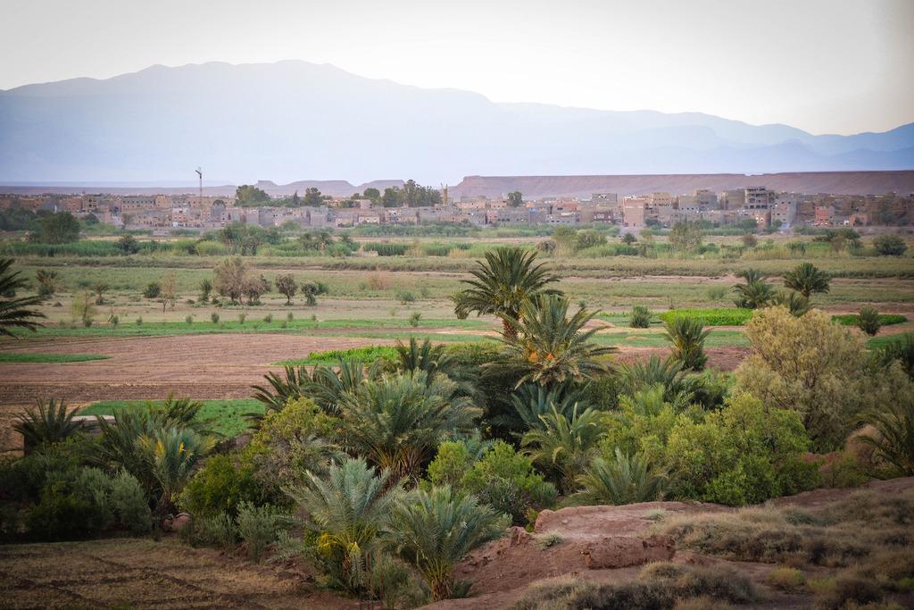 Ouarzazate Oasis.jpg