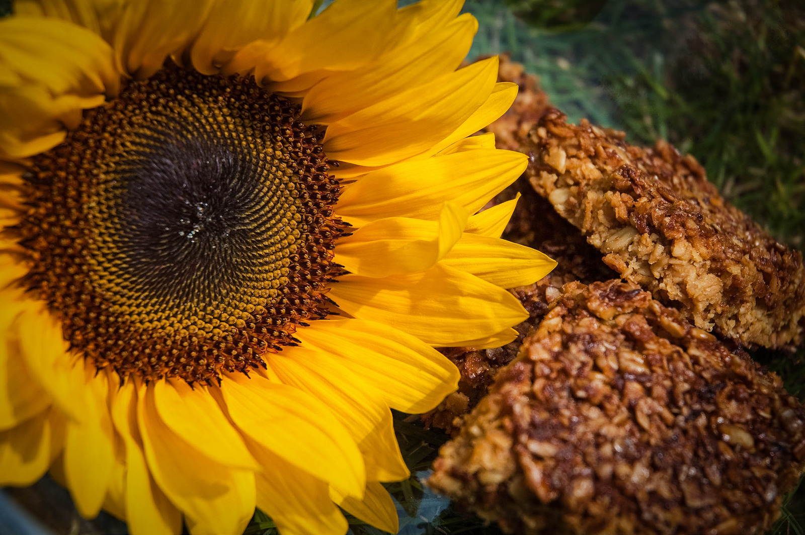 CopyRight Urvashi Roe_Lemoney Sunflower Seed Flapjacks.jpg